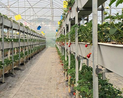 重庆葡萄采摘基地