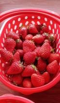重庆草莓采摘基地