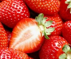 北碚红颜草莓采摘