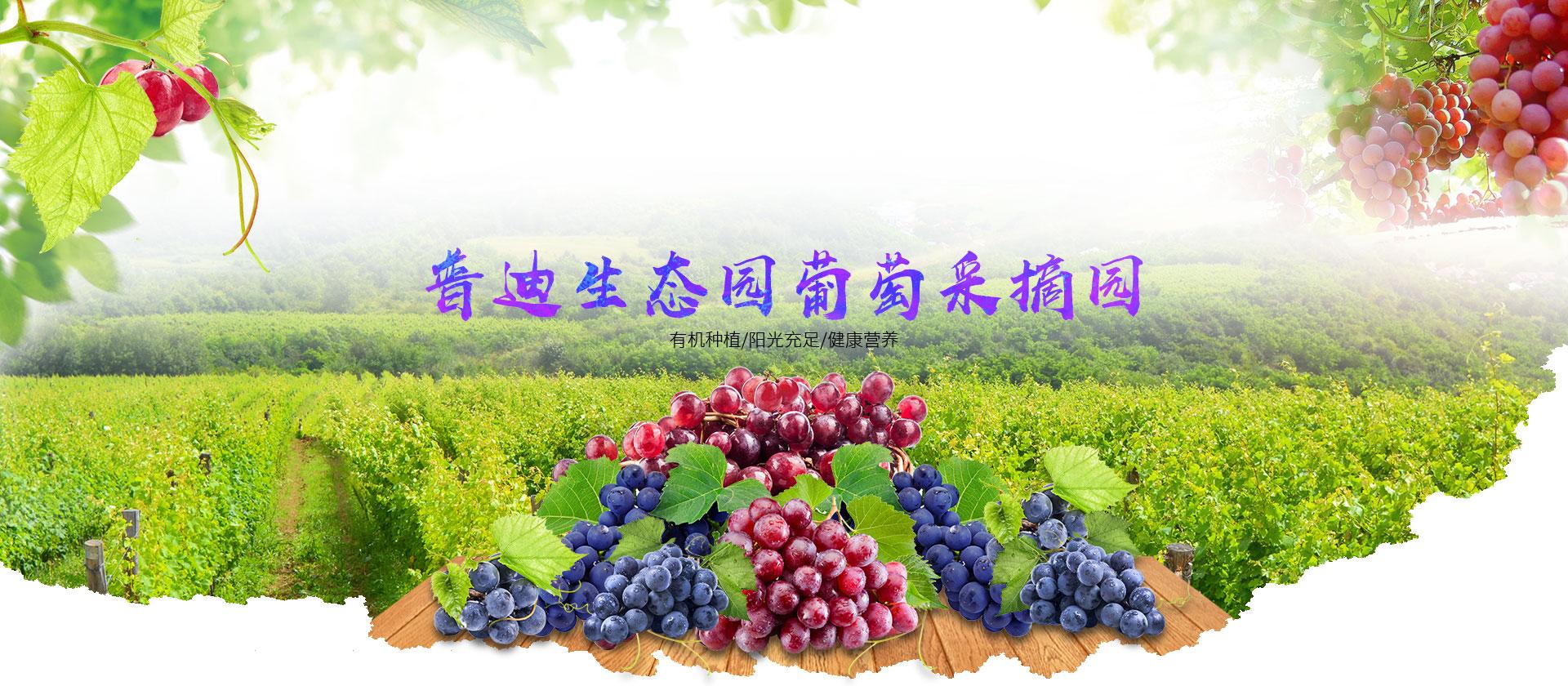 重庆葡萄采摘